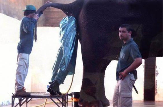 No Matter How Much You Think Your Job Sucks, It Couldn't Be As Bad As These! - (18 Pics)