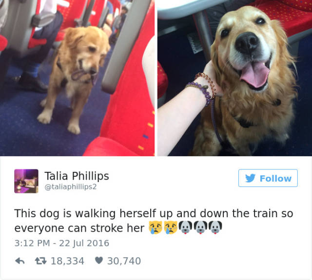 Hilarious And Cute Dog Tweets  (49 pics)