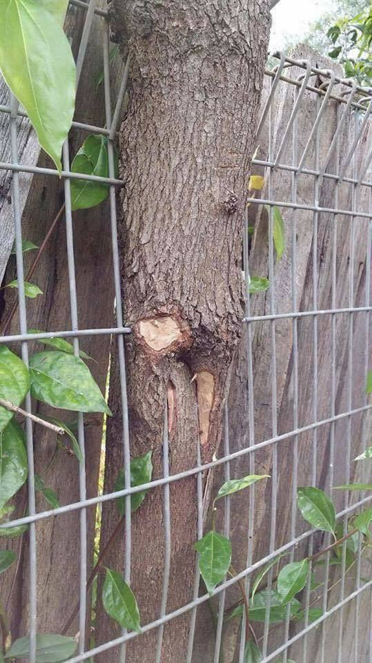 Trees that showed that nature sends over all things (15+ Pics)
