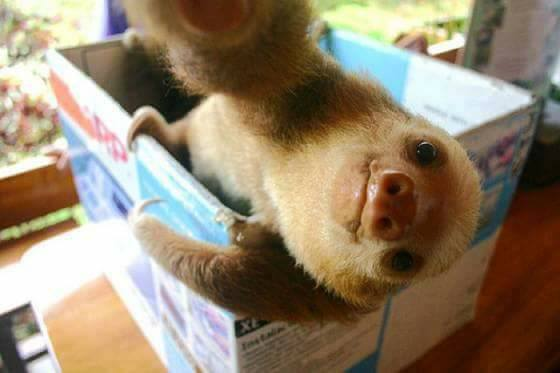 30+ Animals That Mastered The Art Of Selfie