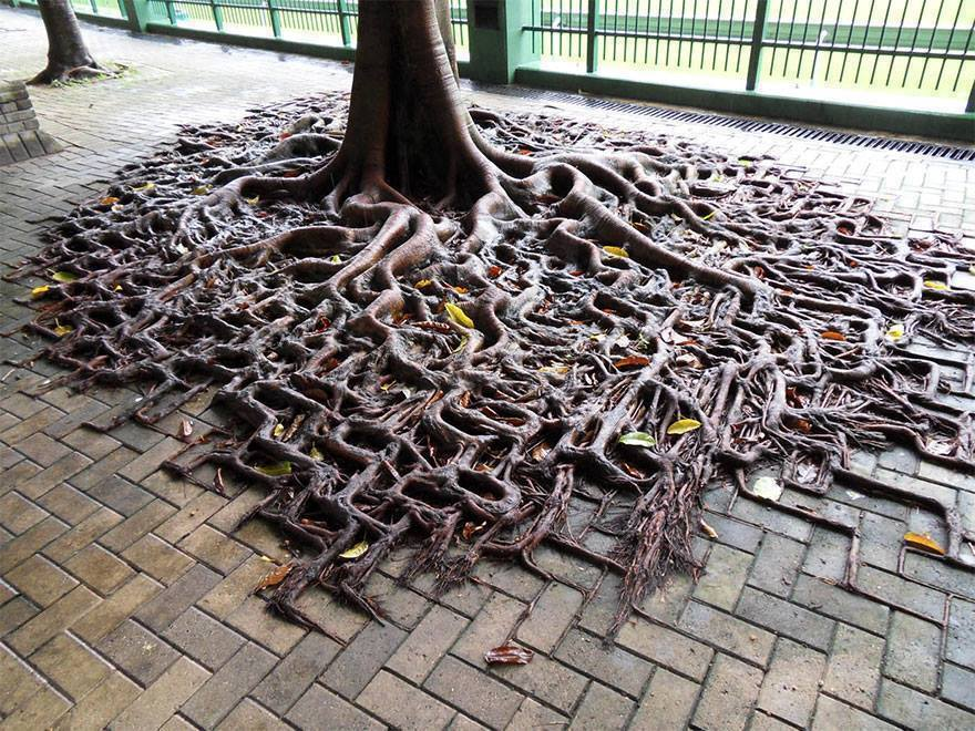 Nature Always Finds A Way! (15 Pics)