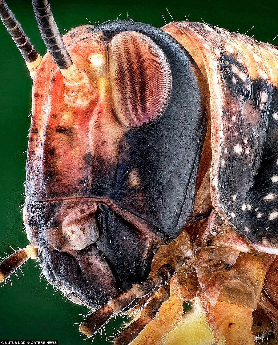 Bugzilla! If you're scared of insects, look away from these magnified images which make creepy crawlies look like dinosaurs