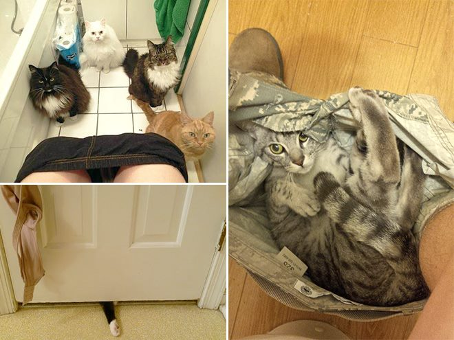 Pets Don't Give a Crap About Your Private Space (29 Pics)