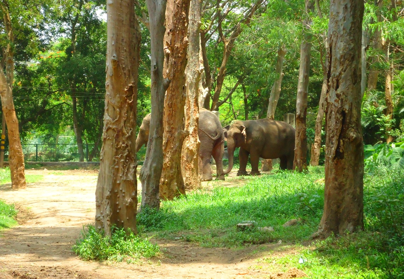 Bannerghatta National Park in Bangalore | Karnataka