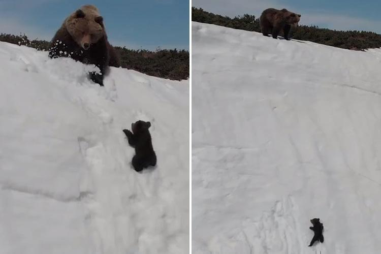We could all learn a lesson from this baby bear: Look up & don't give up.