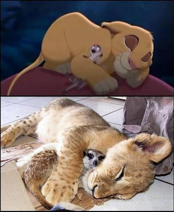 Disney Animals in Real Life - (11 Pictures)