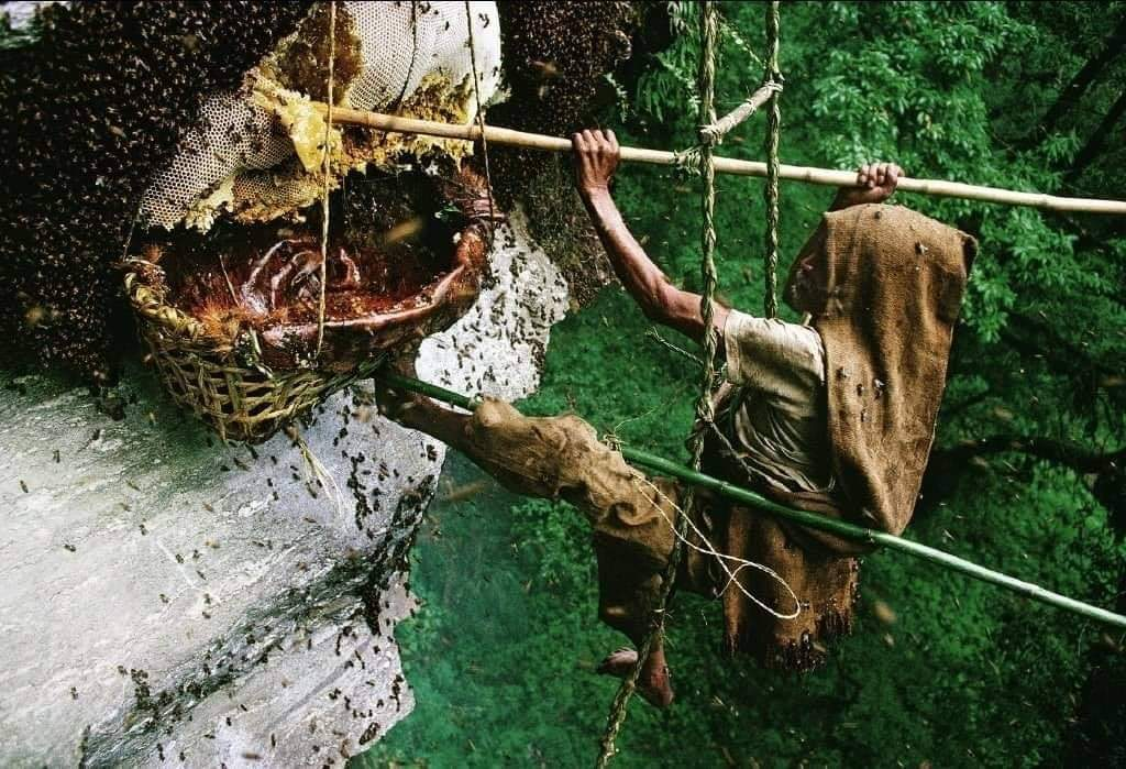 Wild honey hunters of Nepal (25 Pics)