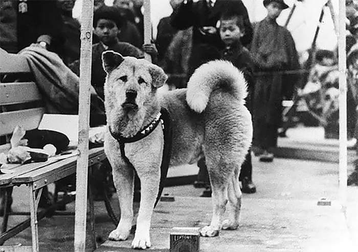 Rare photos of Hachiko - Patiently waiting for his owner
