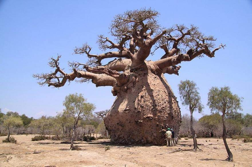 50+ Amazing trees around the world