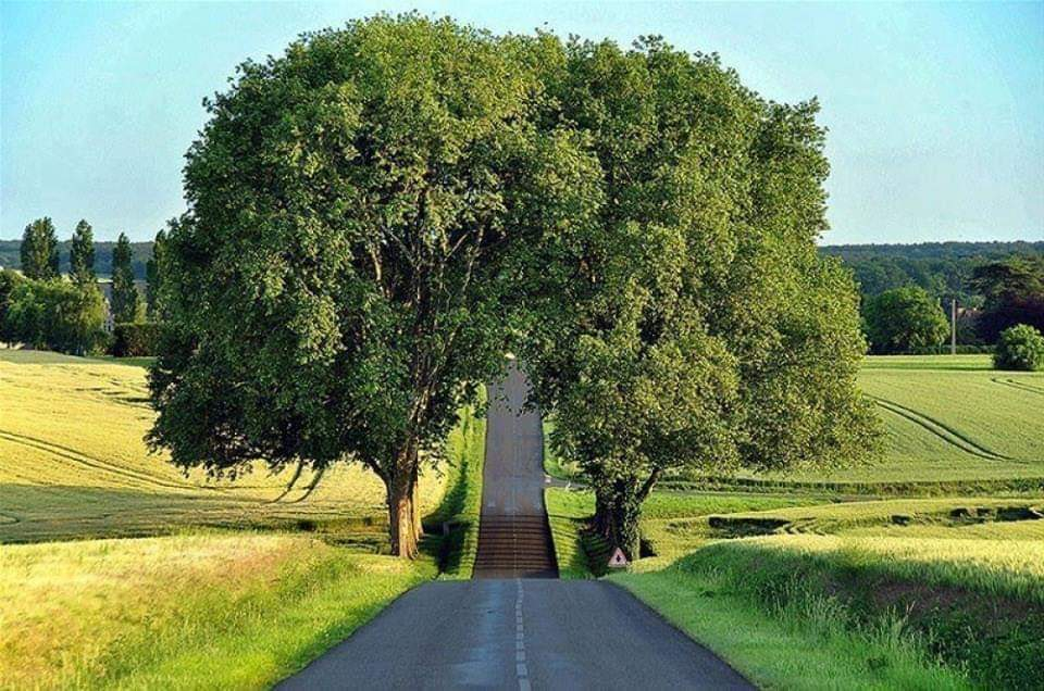 Amazing tree tunnels