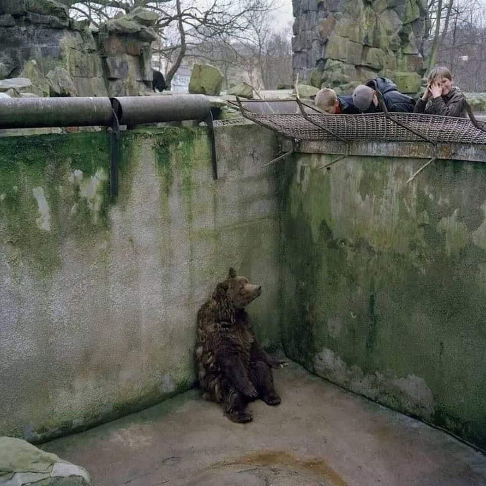 We only have a few weeks in quarantine, Just imagine them having their whole life in cold and lonely cages..!!