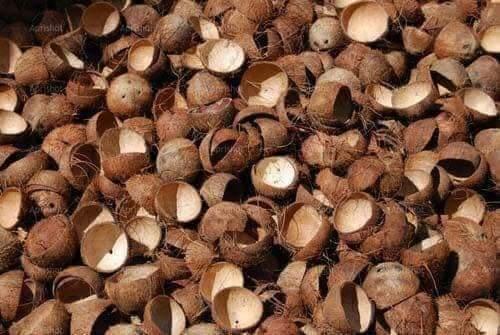 Coconut Transformation (25 Pics)