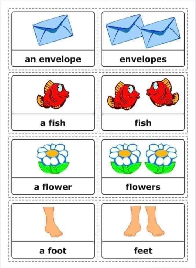 Some Useful Vocabulary - Singular and Plural Nouns | English Lessons