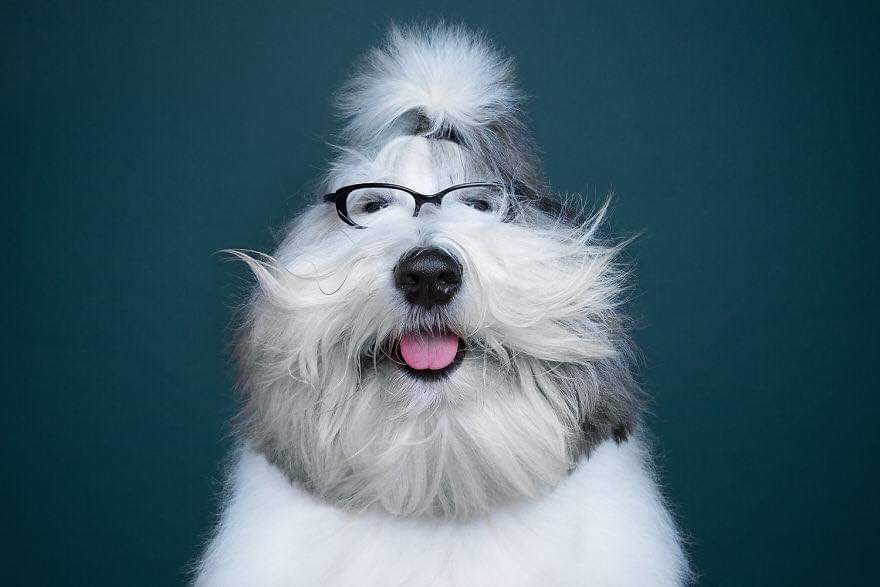 The Creative Duo From Moscow Alexander Khokhlov And Veronica Ershova, Explore The Uniqueness Of Different Dog Breeds And Their Beautiful Personalities (59 Pics)