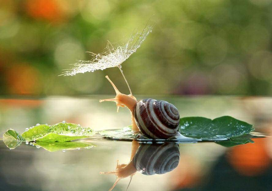 A Magical Miniature World Of Snails By Vyacheslav Mishchenko (12 Pics)