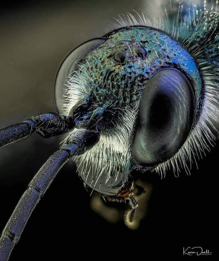 Close footage of insects (35 Pics)