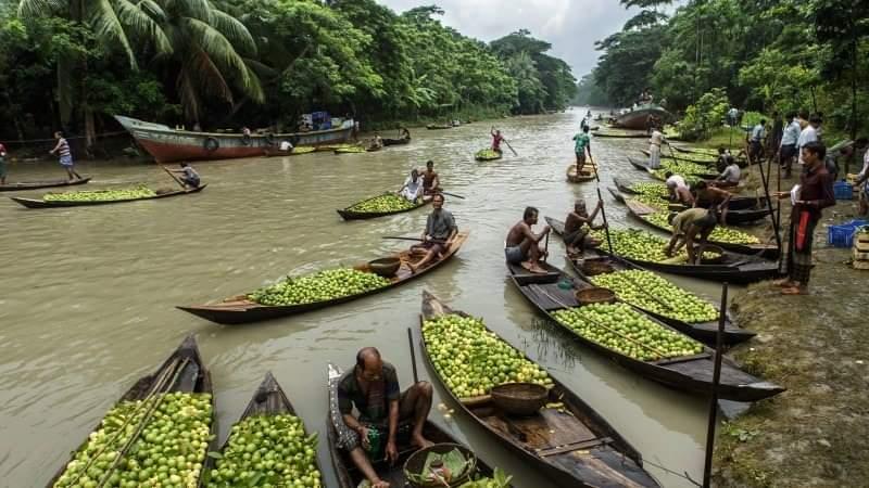 Floating Guava Market In Rural Bangladesh