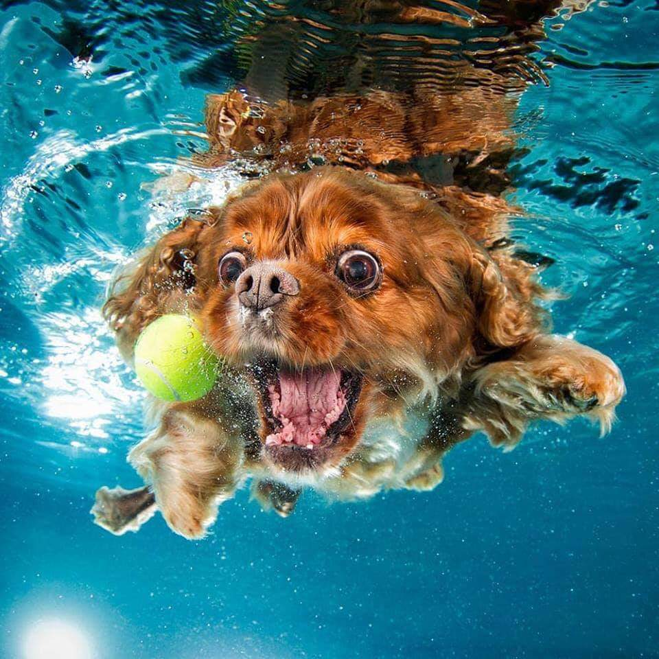 Pet photographer Seth Casteel captures hilarious underwater portraits of dogs as they jump into a swimming pool (11 Pics)