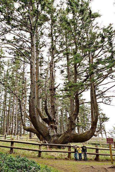 Most Amazing Trees From All Around The World (13 Pics)