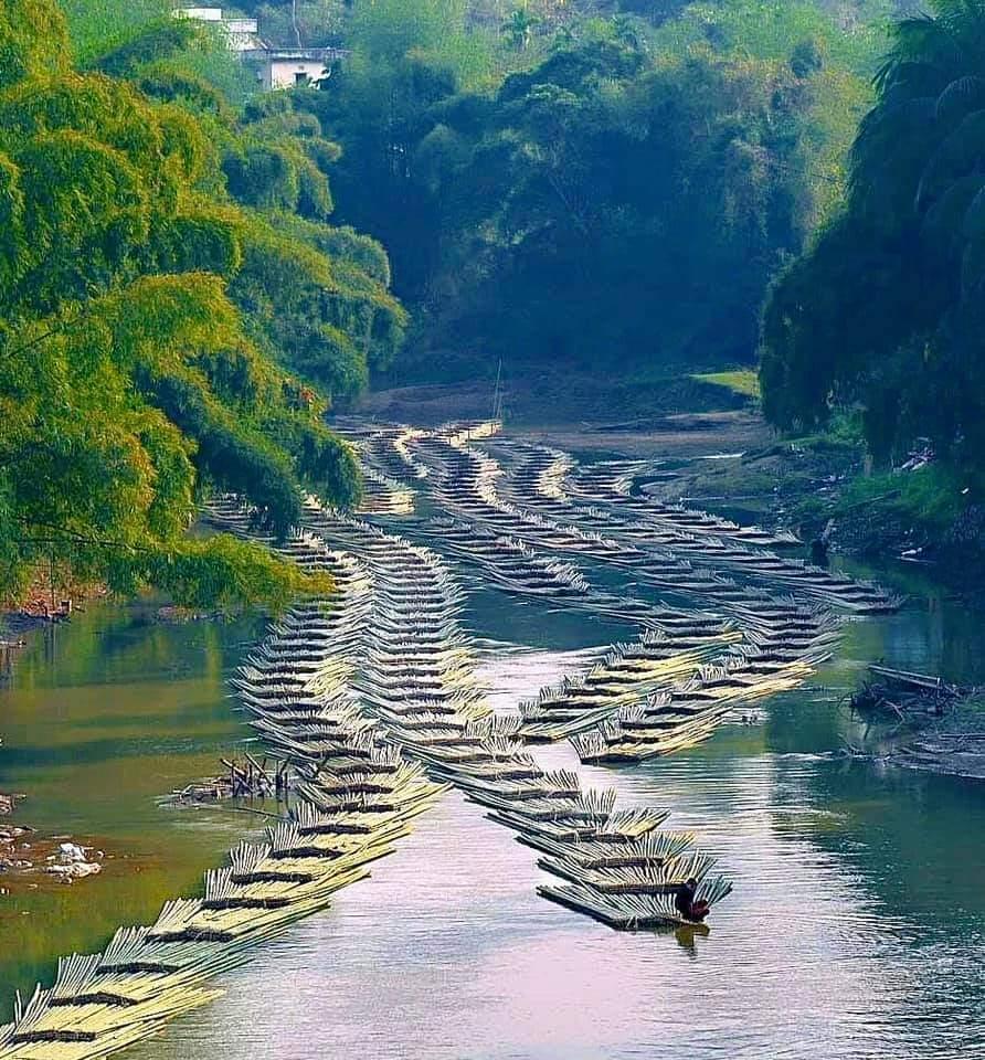 1Pic - Bamboo Logs Transportation  In Aizawl, Near The Tripura-Mizoram State Border In Damchara