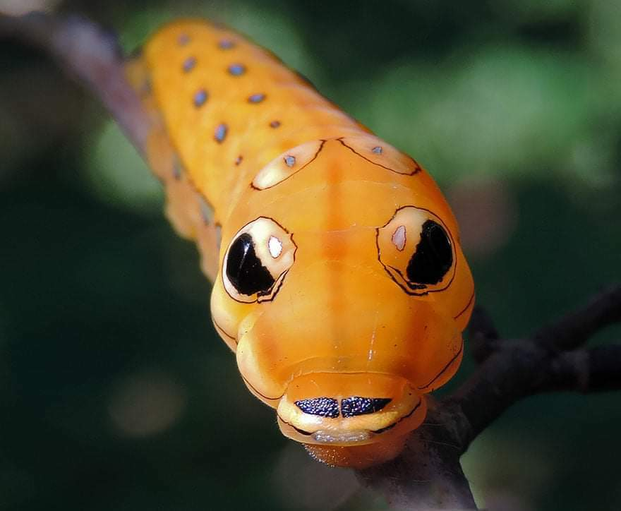 Most Beautifully colored caterpillars! (12 Pics)