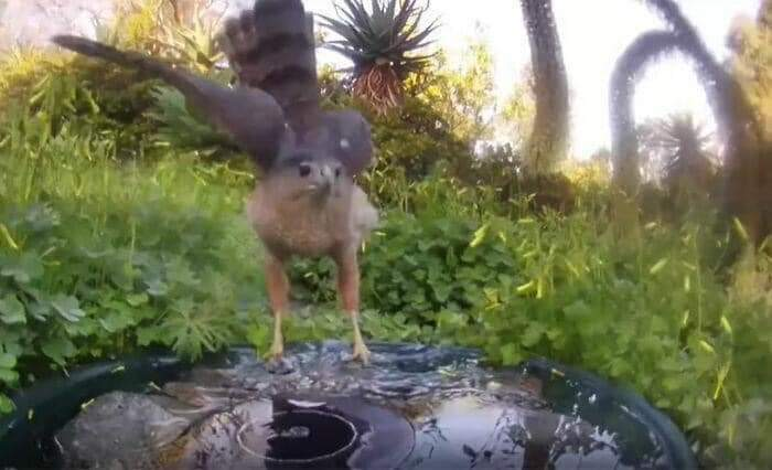 A women by the name of  Jennifer George, placed a water fountain with a camera in her yard, here are stunning photos of the regulars (29 Pics)