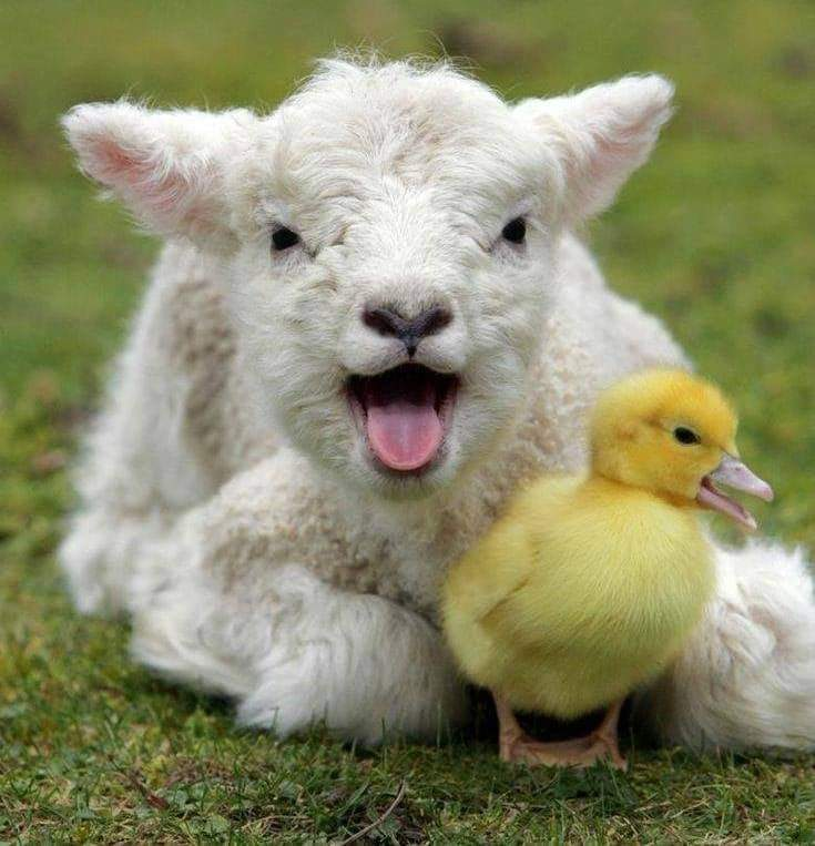 Very Special Animal Friendships (34 Pics)