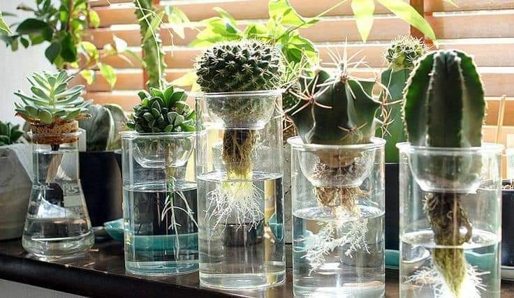 Growing plants and flowers in recycled containers (17 Pics)