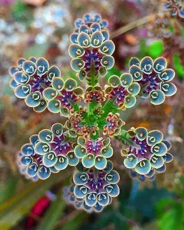 Most Amazing Nature Vibes (10 Pics)