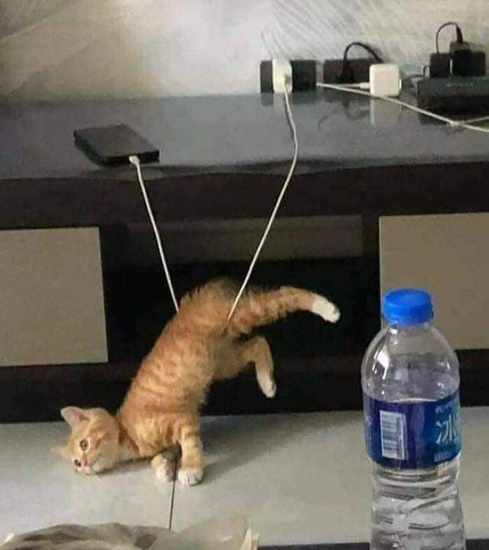 40 Funny Cat Pictures
