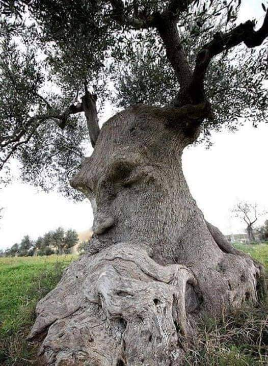 20 Most Mysterious and Weird Trees
