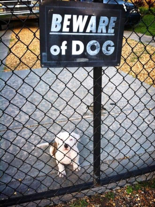 """Dangerous Beasts Behind """"Beware Of The Dog"""" Signs (21 Pics)"""