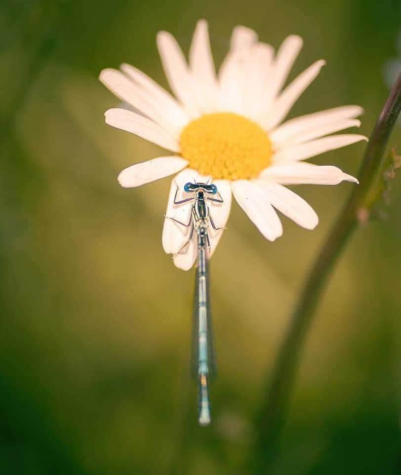 Incredible Macro Shots Of Insects And Wildlife Creatures By Belgium Based Artist Niki Colemont (23 Pics)