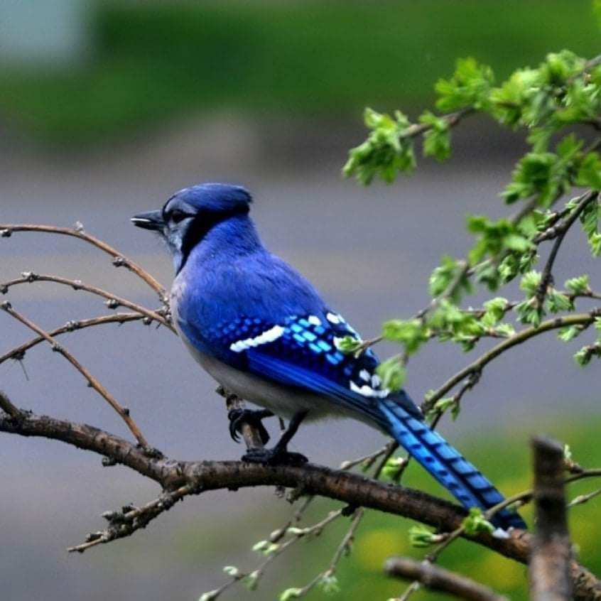 100+ Pictures Of The Most Beautiful and Amazing Birds Of The Earth