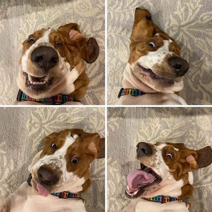 Funny Dogs (30 Pics)