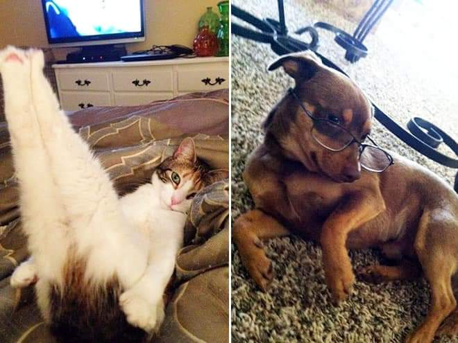 If Animals Had Tinder, These Would Be Their Profile Pics (23 Pics)