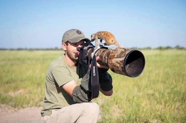 20 Funny Wildlife Moments