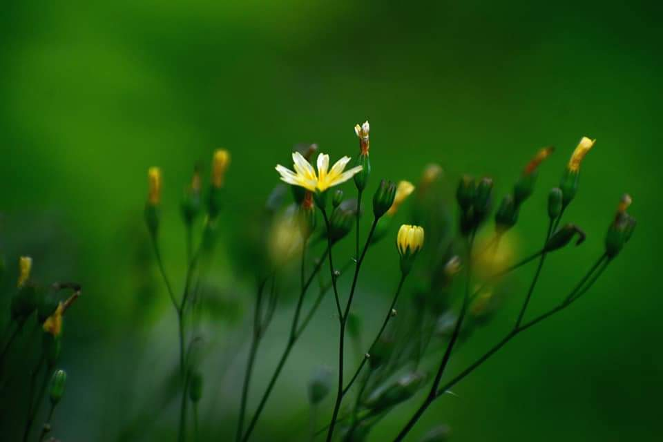 Bloom in nature (25 Pics)