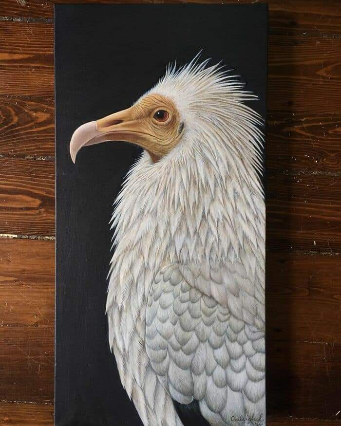 Hyper-Realistic Animal Paintings By 19-Years-Old Artist Caileigh L