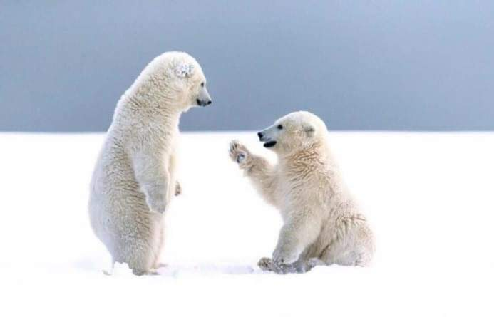 22 Endearing Photos Of Animals That Captured Their Gestures At The Exact Moment!