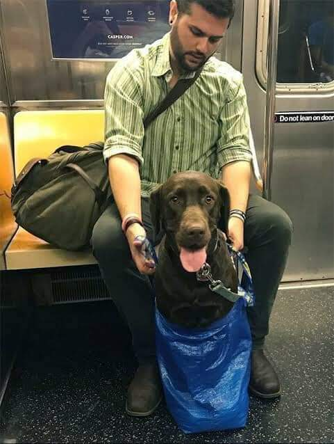 NYC subway has banned dogs unless they fit inside a bag. New York commuters did not disappoint (19 Pics)