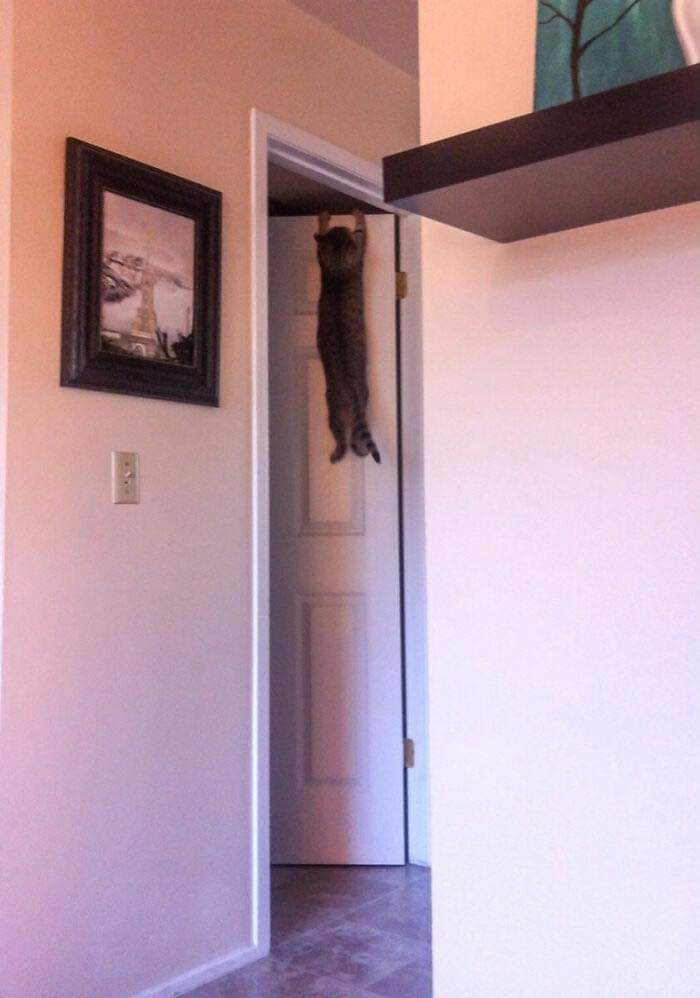 Cat Owners Share The Weirdest Places Their Cats End Up In
