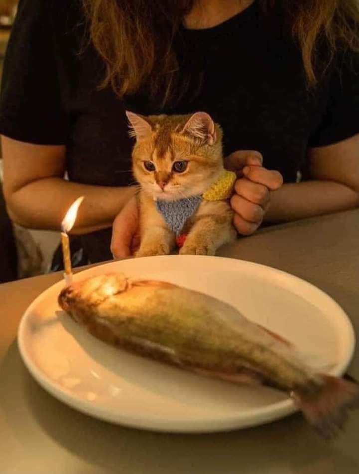 Surprise - Happy Birthday Cutie Cat!