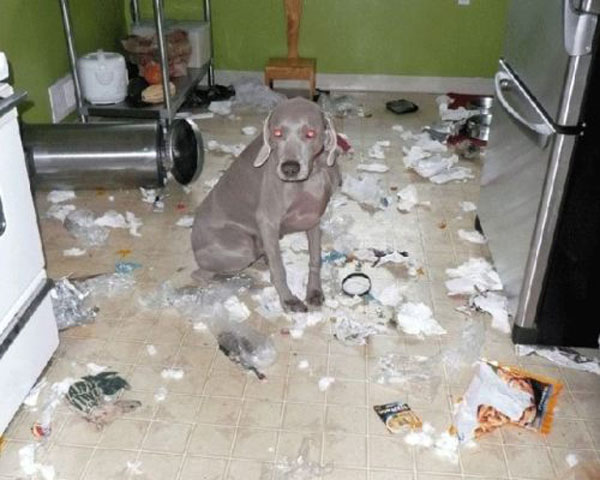 15 Funny Dog Photos Puppies Making Messes
