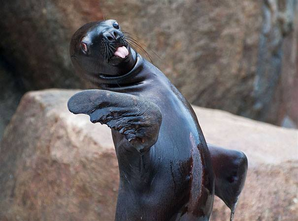 Hilariously Unphotogenic Animals (30+ Pics)