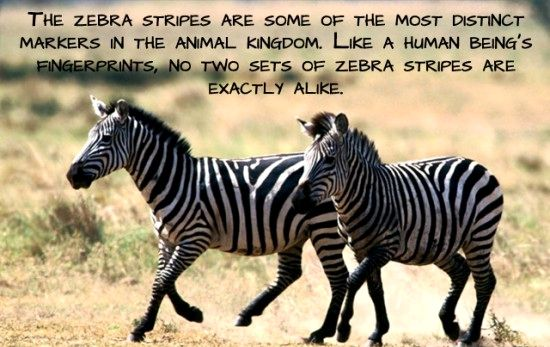 24 Amazing and Interesting facts about animals