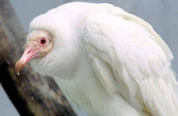 26 Spectacular Rare Albino Animals