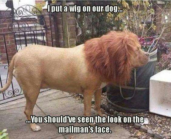 Funny Animals Pics - (15 Pics)