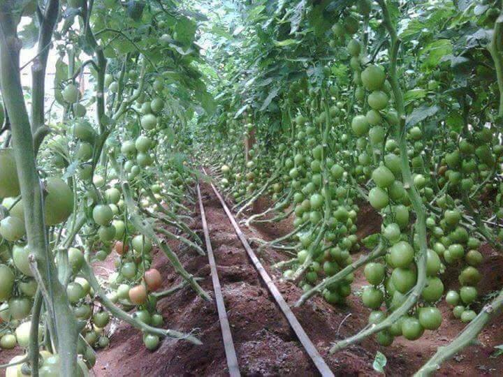 Wow Excellent Agriculture (30 Pics)