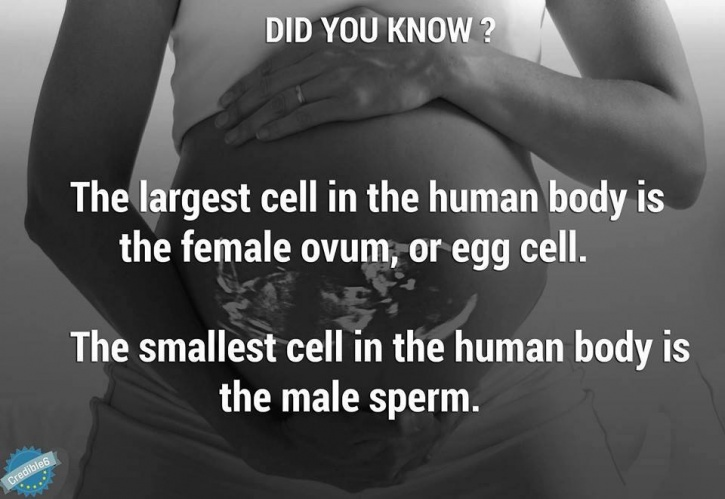12 Facts About Babies In The Womb You Will Be Surprised To Know
